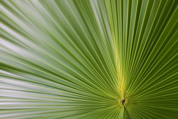 Here is a simple shot of a palm leaf with the sun reflexting off it. Just one shot from my trip south. Have a great day everone...
